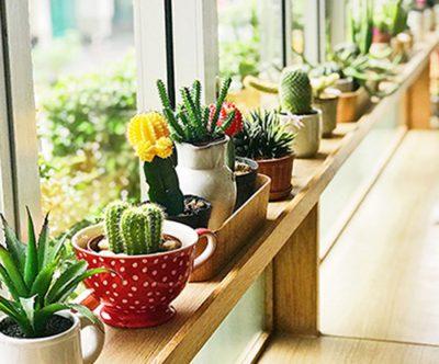 Eine Fensterbank mit unterschiedlichen Blumetöpfen